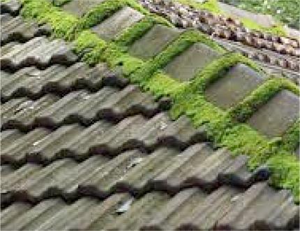 Les différentes versions de tuiles pour toiture