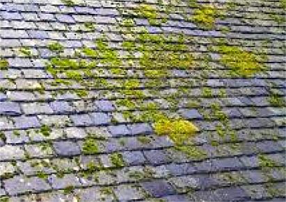 Le toit en ardoise, parfaite pour un toit en pente
